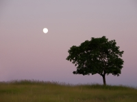 Bigfork Moon