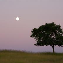 Bigfork-moon