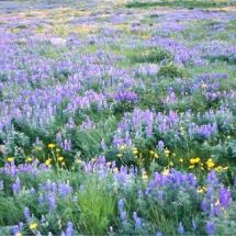 saint-marys-flowers